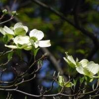 鶴見緑地の 花たち 元気がいいですねぇ~