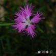 平成29年7月17日(月) 玉原湿原へ花見♪