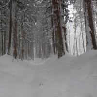 雪の戸隠奥社参り