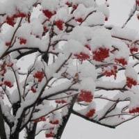 大雪(札幌)でござる 雪加減よろしく赤ら顔
