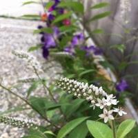 6月の庭。。。その3