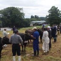 第3回気仙沼市畜産共進会,第13回南三陸畜産共進会が開催されました。