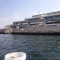 東京湾で船アジ釣り(2017年5月)