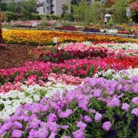 うめきたガーデンの花々