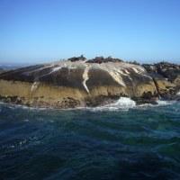 「東南アフリカ」編 アザラシの島・ドイカー島2