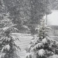 雪!本降り!!!