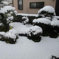 雪が降った / 車の安全のこと