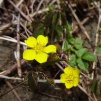 唐鳥屋城山~立峠◆足元の 花の名前は知らねども・・・