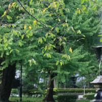 ●東京 日比谷公園  鶴の噴水 青空