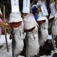 秋田県 掛魚まつり       2017.2