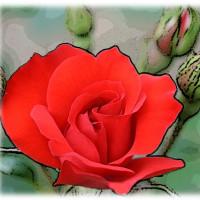 公園の薔薇2