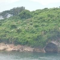 丸亀島・・絹島