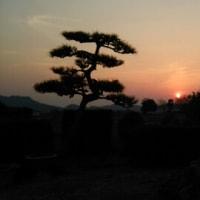 総社の備中国分寺に夕陽を写メに行ったよの巻