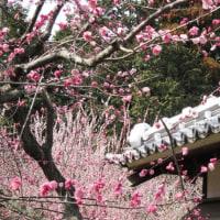 「送梅」の弘道館、そしてふすま絵の下張り墨絵講座
