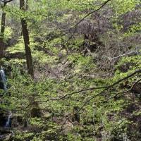 山岳点景:滝の森、卯月
