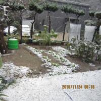 初雪が千葉市にも(11月24日)
