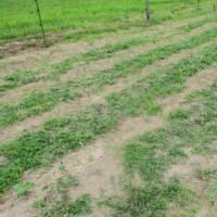 真夏日に農作業