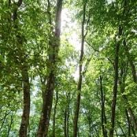 美人林と大地のゲージュツ