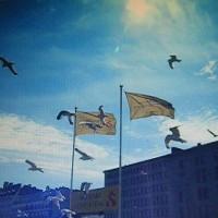 フィンランド・エストニア エピソード2 かもめとスズメ