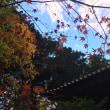 ザ、晩秋の行楽日。