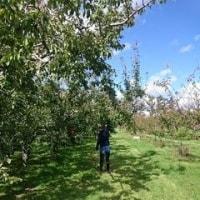 プルーン&りんご狩り➡ショッピング➡MOZU