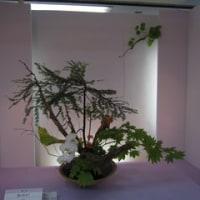 いしかわ四季の花協会展を見てきました。(5/12)NO.4
