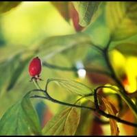 庭にも秋が!