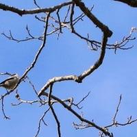 小さい小鳥たち