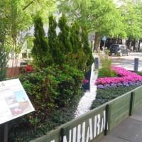 ランチをしてからみなとみらい経由で、日本大通りの緑化横浜フェアを見てきました。