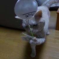 後編)ネコの日 =^_^=