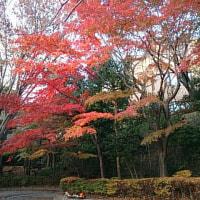 五反田の池田山公園の紅葉