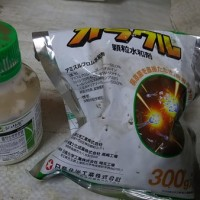 ミニ白菜定植(4回目)