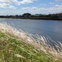 春の藤前干潟クリーン大作戦2017が開催されました。