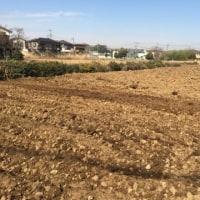 【クワが曲がるほど大きく硬い土を砕き整形した畑。半年かけてやっと春野菜が植えることができる畑へと変化しました☆】