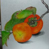 とよこの絵 取りたての甘い柿、葉つきで頂いたのですぐ描きました,描いた後食べましたら美味しかったよ~