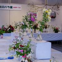 2016 秋のバラフェスタ@神代植物公園 其の3