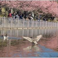 小松が池公園