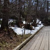 湯ノ湖・湯滝の歩道状況+釣り?