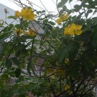 近所に咲いている花