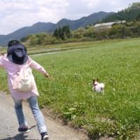 4/29 今日のパピ子といちご (トムミルクファーム)