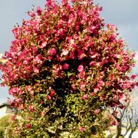 新春の散策と木々のそよぎに思うこと