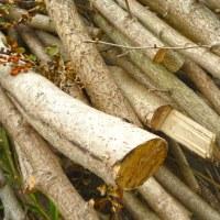 森林伐採の現状