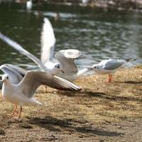 今日も野鳥