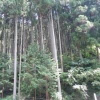 森林は都市に暮らす人々に役立っています