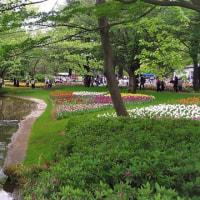 昭和記念公園のチューリップ広場♪