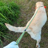 ☆☆☆ 下手な考え休むに似たり・兎に角犬を飼う者、身体を動かせ~水曜日・・・
