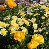 街角の花々