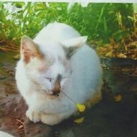 猫の鼻に吹き矢、女性が保護(沖縄)