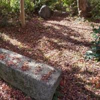 最後の紅葉・八幡市〝善 法 律 寺〟