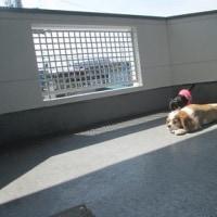 日光浴隠し撮り&麻央さんはセカンドピニオンしなかった事をブログで後悔してた